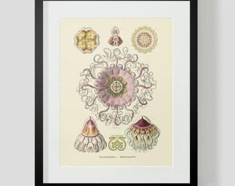 Vintage Ocean Life Jellyfish Print 2