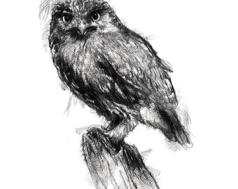 Little owl | Limited edition fine art print from original drawing. Free shipping.