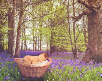 Digital backdrop, bluebell flowers in a woodland setting with a baby basket