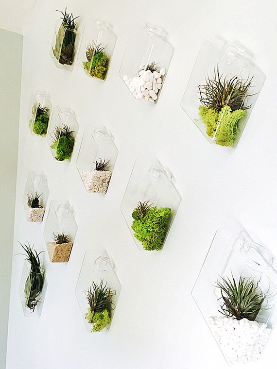 il_570xN.1043024893_kz6s Air Plant Housewarming Gift on plant flowers, plant kitchen, plant jewelry, plant books, plant home,