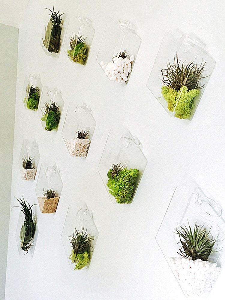 Set of 10 rhombus glass wall vase indoor wall planters diy - Indoor plant wall diy ...