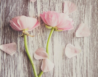 Petals ~ 8x10 photo print
