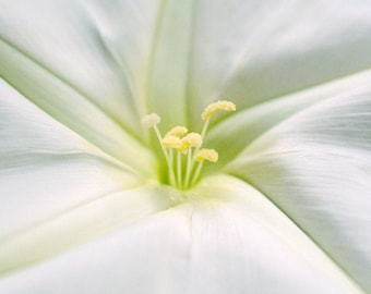 Romantic Wedding Gift Fine Art Flower Photography - Moonflower Canvas Gallery Wrap Giclee - Nature Photography Wall Decor Art Made in Hawaii