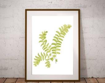 Fern Art Print, Maidenhair Fern Print, Woodland Print, Minimalist Art, Botanical Art, Green White Wall Decor, X-Ray Effect