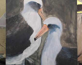 Laysan Albatross Love