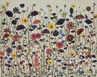 Field of Dreams 18 X 24 Pressed Flowers Limited Edition print