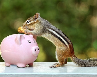 Piggy Bank, Chipmunk Print, Peanuts, Girls Room Decor, Funny Animal Art, Cute Animals, Animal Poster, Nature Prints, Nature Photography