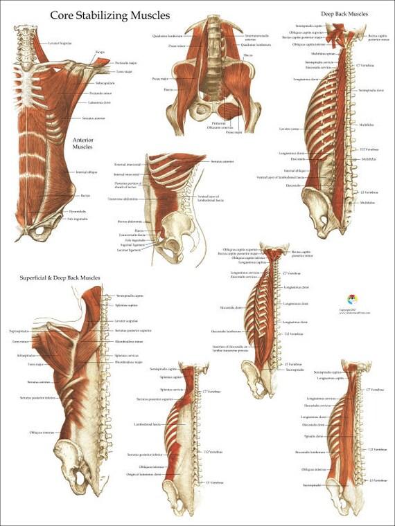 Tief und Kern stabilisierende Muskeln Anatomie Poster 18