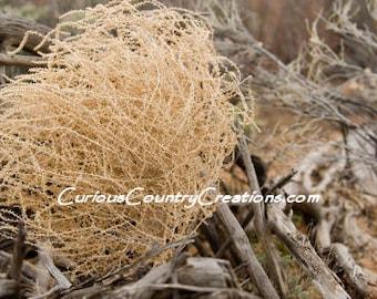 Giant Tumbleweed | Tumbleweed | Dried Plants | Rustic Wedding