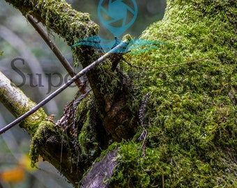 Mossy Tree 11x14