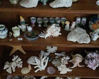 Hawaiian Shell Starfish Sand dollar Collection