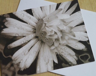 Marigold Float // Black And White Photography Greetings Card // Flower Greeting Card // Floral // Nature - Float - Dreamy - Raindrops