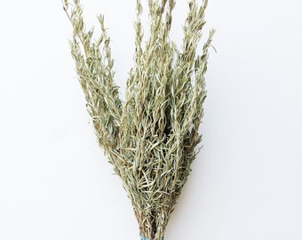 Dried Rosemary, Herbs, Green, Dry Flowers, Preserved Floral, Wildflowers, Farmhouse, Country, Wedding Bouquet, Filler, Bundle, Bunch