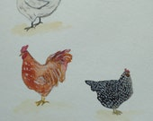 Chicken note cards come i...