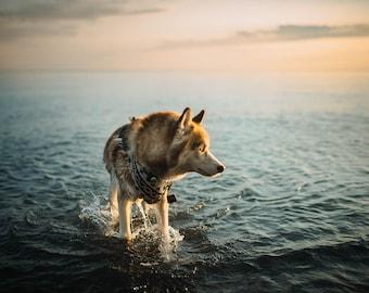 Ocean Husky Print
