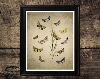 Vintage Butterfly print, butterflies art, room decor, butterfly wall decor, butterfly printable art
