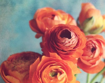 "Botanical Photography, Aqua Teal Wall Decor, Ranunculus Wall Art, Orange Flower Print  ""Precious Gift"""