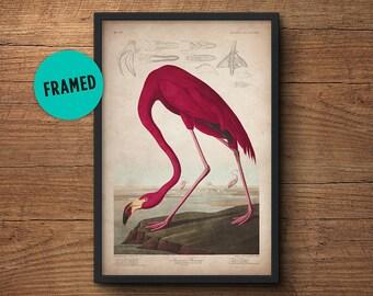 Flamingo poster, Framed art, Flamingo print, Audubon print, Audubon print, Birds of America, John James Audubon, Framed print, Wall art