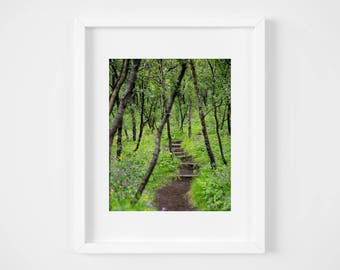 Path in the woods print - Iceland landscape photo - Nature photography - Large wall art - Iceland photos - 5x7 11x14 16x20 - Photo gifts mom