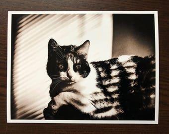 Cat photography, pet portrait, retro, film noir, cat lover gift, black and white, photo printing, animal art, feline card, beautiful kitty