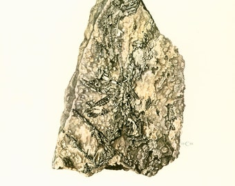 1970  Illustration Sylvanite. Planche Originale Pierres Mineraux Roches. Geologie. Decoration murale.