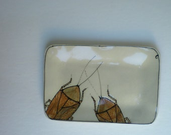 cockroach  tray