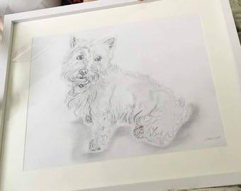 Original commsioned hand drawn pencil pet portraits