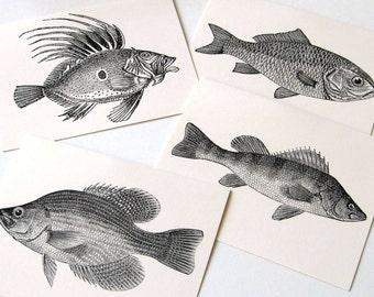 Fresh Fish Notecards - Set of 12