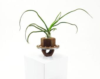 Found object Tillandsia air plant holder