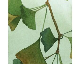 "Watercolor Giclee Print - ""Gingko"" - Botanical Painting"