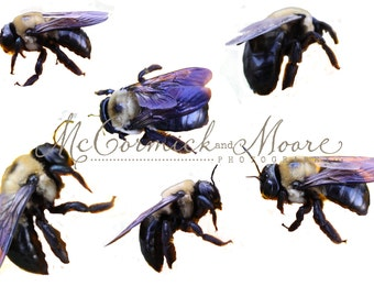 Bee Overlay - Insect Bee Bumblebee Honey Bee Nature Overlay - Photoshop Overlay - Photoshop Template - Instant Download