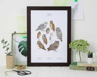 Owl Print   Owl Wall Art   Watercolour Bird Print   Zoology Print   Natural  History
