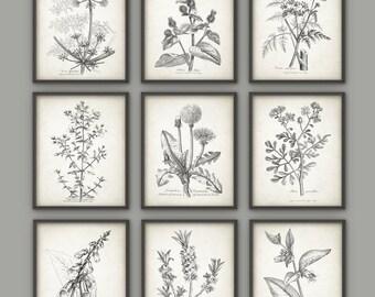 Antique Botanical Print Set of 9, Vintage Botanical Home Decor, Plant Book Plate Illustration, Garden Flowers and Herbs Set of 9 B491