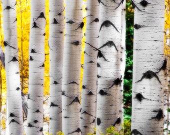 Aspen trees fall, fall tree photo, aspen tree decor, Colorado art, rustic wall decor, log cabin art, fall leaves photo |  Fall Trunk Show