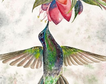 Jewel Tone Hummingbird 11x14 Giclee Print - Clearance