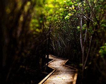 "Landscape Photography, St John USVI Photograph ""Through the Mangroves"" Caribbean Fine Art. Green, Paradise 8x10, 11x14, 16x20, 20x24, 24x30"