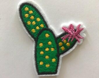 Mini cactus patch