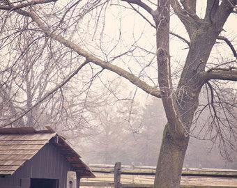 Sheep Photograph, Rustic Decor, Barn, Farmhouse Print