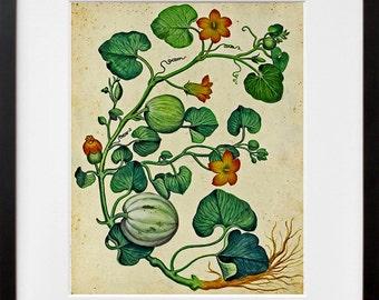 Botanical Print Vintage Vine Art Illustration
