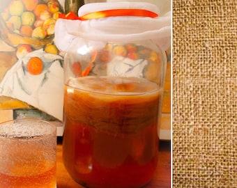 Organic Kombucha Scoby Mother Cultures - Live Probiotic Culture for Homebrew Kombucha Tea