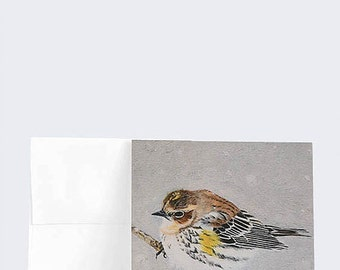"""GREETING CARDS, Yellow-rumped Warbler, Warbler, Bird, oil, 5.25"""" x 5.25"""", pack of 6"""