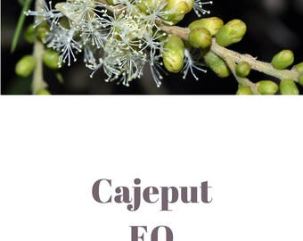 Cajeput essential oil QRDS