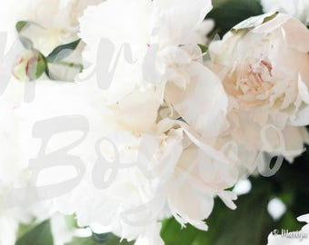 White Fluffy Peonies