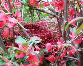 digital download, nature, nest, bird, yard, woods, forest, woodlands, farm, field, red nest, robin, spring, home decor