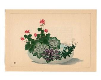 1933 IKEBANA FLOWER ARRANGEMENT Japanese botanical lithograph - original vintage print - geranium  cabbage & marguerite - moribana
