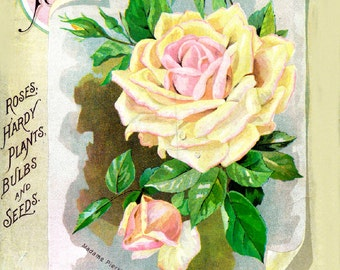 The Dingee Conrad Co. 03 Rose Growers Seed and Plant 1892  Seed Company Bright Colorful Print  Vintage Reproduction Print 11 x17