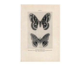 c. 1934 GIANT MOTHS print - vintage insect print - vintage entomology print - old bug print - vintage lithograph of insects