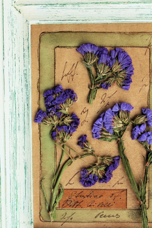 Marcos de madera rústica, Real herbario de estilo rústico presionado ...