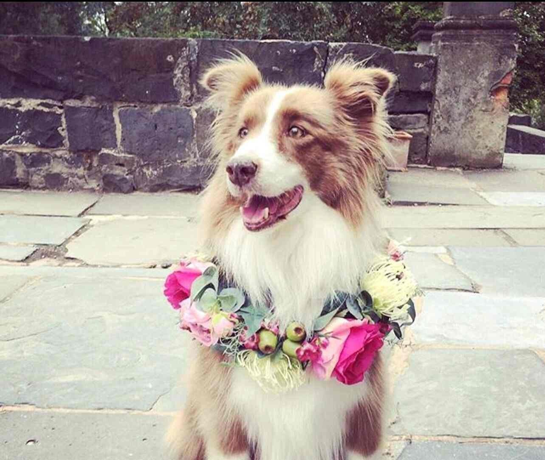 Dog Puppy flower crown. Dog Puppy flower collar. Flower