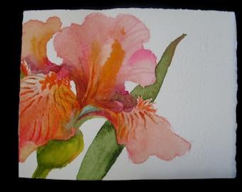 Orange Iris Watercolor Note Card, Handmade, Hand Painted, Blank Card